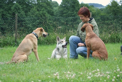 Advanced Diploma in Canine Behaviour Management and Practice