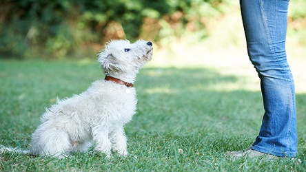 4 Day Dog Behaviour and Training Course