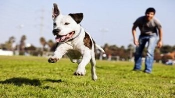 2 Day Dog Training Course