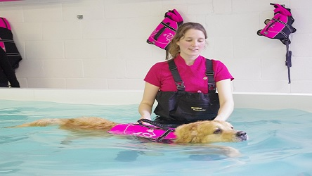 Animal Hydrotherapy Course