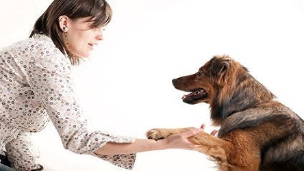 Intensive Course for Dog Trainers