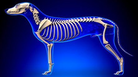 Canine Anatomy and Physiology Certificate Course