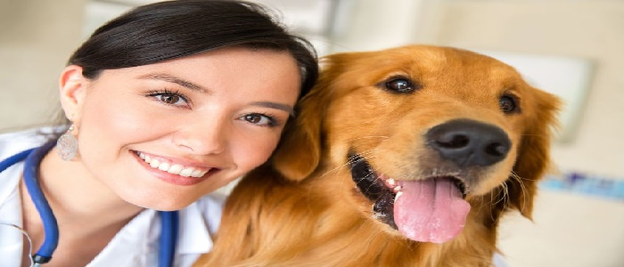 Canine Behaviour College Admissions and Academics