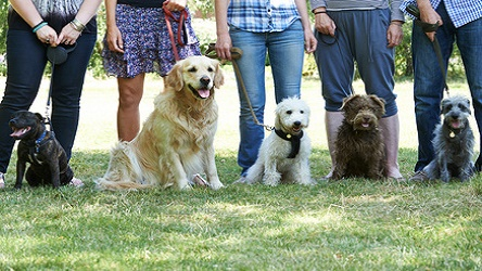 Dog Behaviour Practitioner Diploma Course