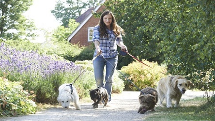 Dog Walking Certificate Course
